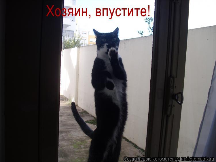 Котоматрица: Хозяин, впустите!