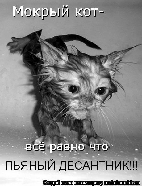 Котоматрица: Мокрый кот- всё равно что ПЬЯНЫЙ ДЕСАНТНИК!!!