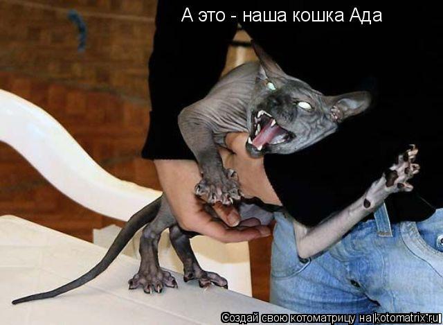Котоматрица: А это - наша кошка Ада