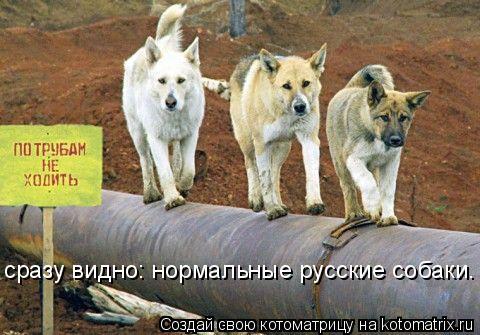Котоматрица - сразу видно: нормальные русские собаки.