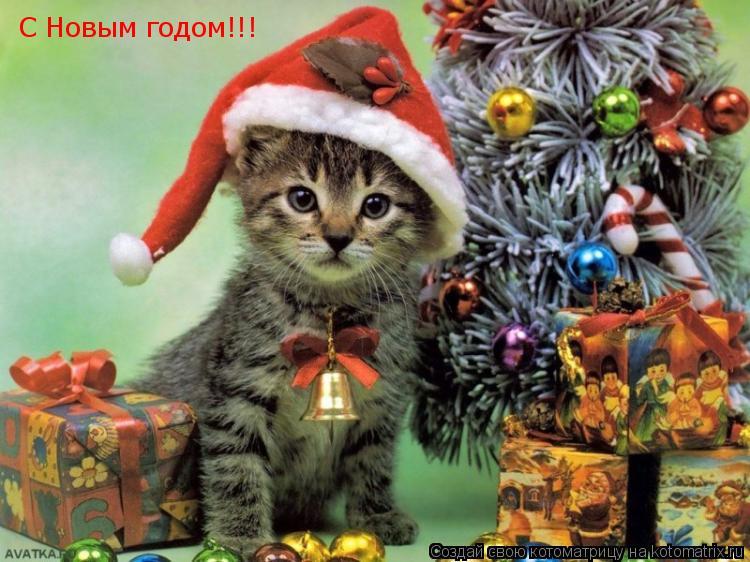 Котоматрица: С Новым годом!!!