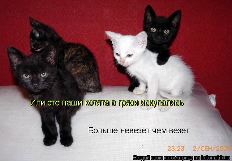 Котоматрица: Больше невезёт чем везёт Или это наши котята в грязи искупались Или это наши котята в грязи искупались
