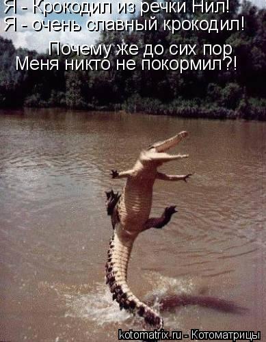 Котоматрица: Почему же до сих пор Я - Крокодил из речки Нил! Я - очень славный крокодил! Меня никто не покормил?!