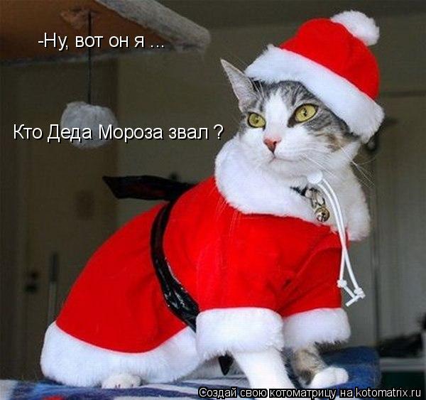Котоматрица: -Ну, вот он я ...  Кто Деда Мороза звал ?