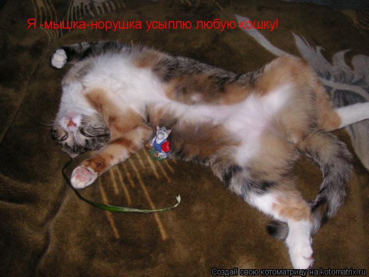 Котоматрица: Я -мышка-норушка усыплю любук Я -мышка-норушка усыплю любую кошку!