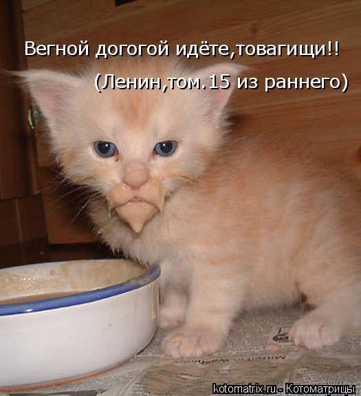 Котоматрица: Вегной догогой идёте,товагищи!! (Ленин,том.15 из раннего)