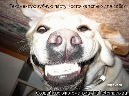 Котоматрица: Рекомендую зубную пасту Косточка только для собак!