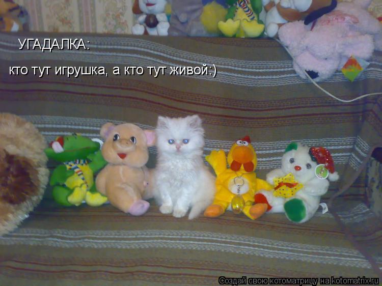 Котоматрица: УГАДАЛКА: кто тут игрушка, а кто тут живой:)
