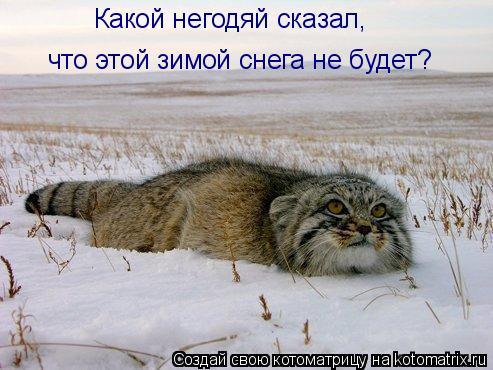 Котоматрица: Какой негодяй сказал,  что этой зимой снега не будет?