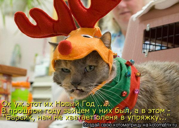 """Котоматрица: Ох уж этот их Новый Год ..... В прошлом году зайцем у них был, а в этом -  """"Барсик, нам не хватает оленя в упряжку..."""""""
