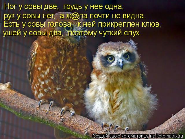 Котоматрица: Ног у совы две,  грудь у нее одна, рук у совы нет,  а ж@па почти не видна. Есть у совы голова,  к ней прикреплен клюв, ушей у совы два,  поэтому чут