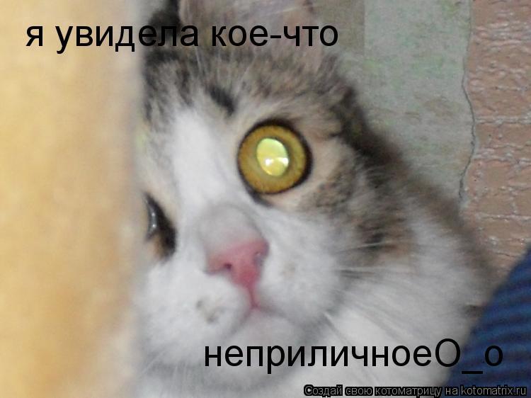 Котоматрица: я увидела кое-что  неприличноеО_о