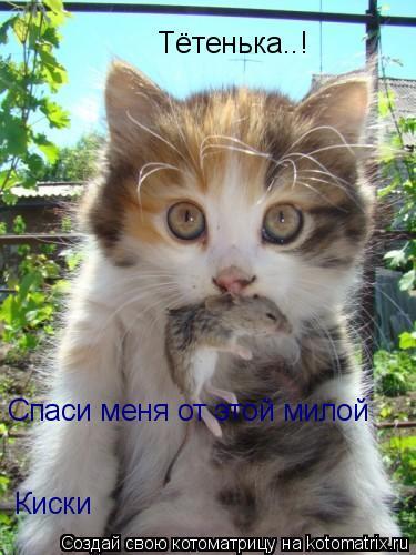 Котоматрица: А-а-а! О владыка! Помоги, спаси от этого кота! А-а-а! О владыка!  Спаси меня от этой милой  Киски Тётенька..!