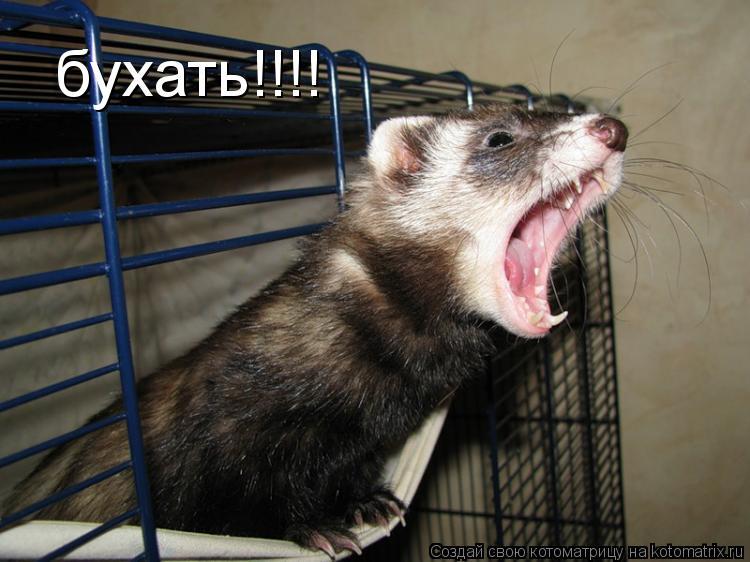 Котоматрица: бухать!!!!
