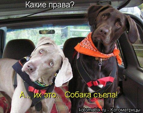 Котоматрица: Какие права? А... их это... Собака съела!