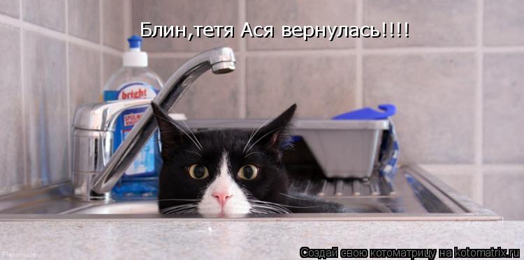 Котоматрица: Блин,тетя Ася вернулась!!!!