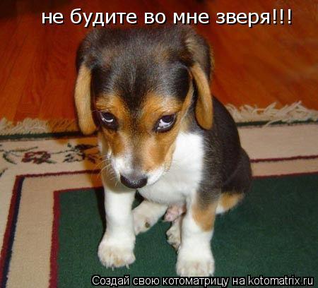 Котоматрица: не будите во мне зверя!!!