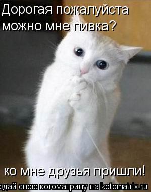 Котоматрица: Дорогая пожалуйста можно мне пивка? ко мне друзья пришли!
