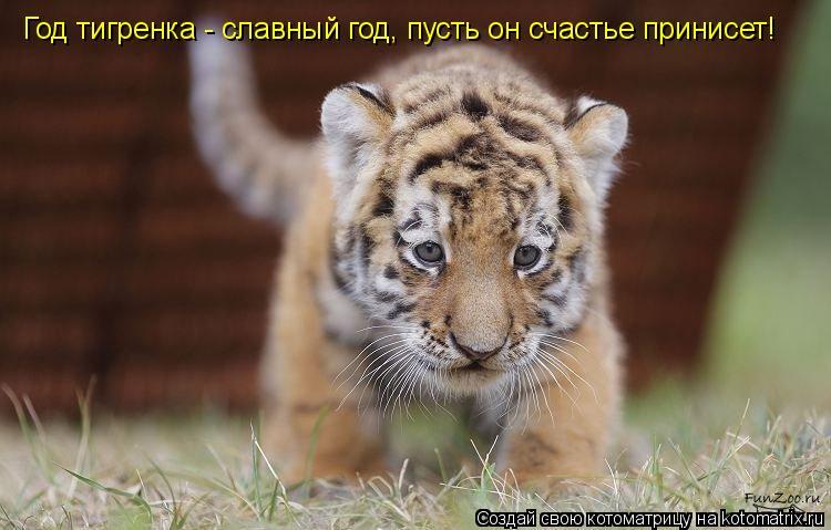 Котоматрица: Год тигренка - славный год, пусть он счастье принисет!