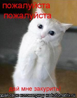 Котоматрица: пожалуйста пожалуйста дай мне закурить!