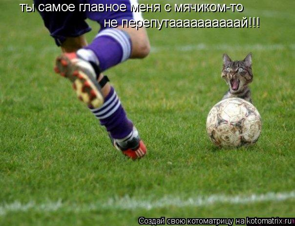 Котоматрица: ты самое главное меня с мячиком-то не перепутаааааааааай!!!