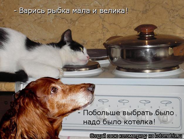 Котоматрица: - Варись рыбка мала и велика! - Побольше выбрать было надо было котелка!