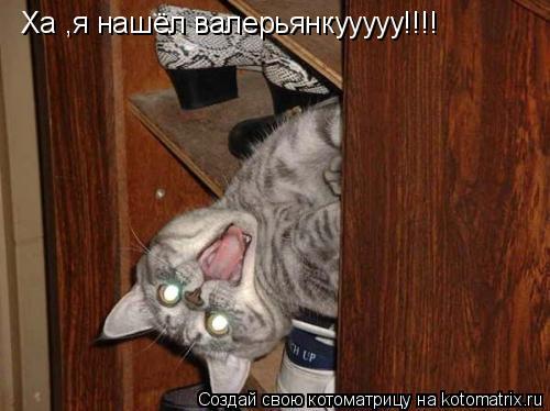 Котоматрица: Ха ,я нашёл валерьянкууууу!!!!