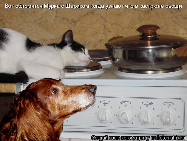 Котоматрица: Вот обломятся Мурка с Шариком когда узнают что в кастрюле овощи