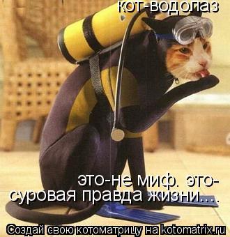Котоматрица: кот-водолаз это-не миф. это- суровая правда жизни....