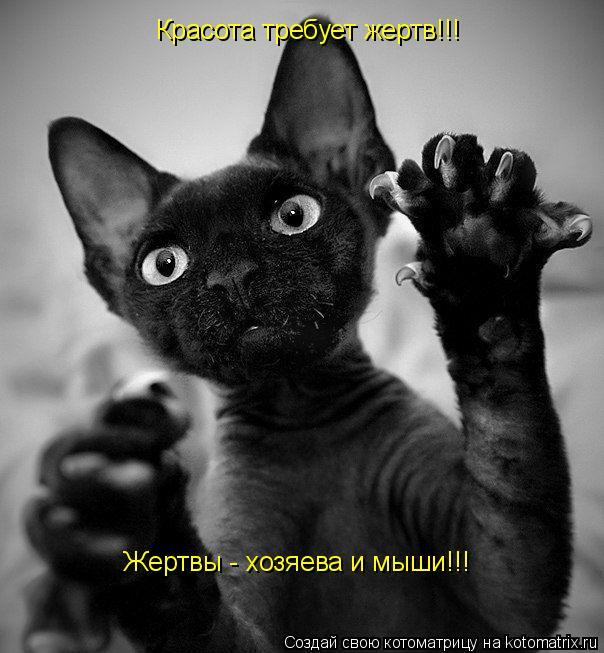 Котоматрица: Красота требует жертв!!! Жертвы - хозяева и мыши!!!