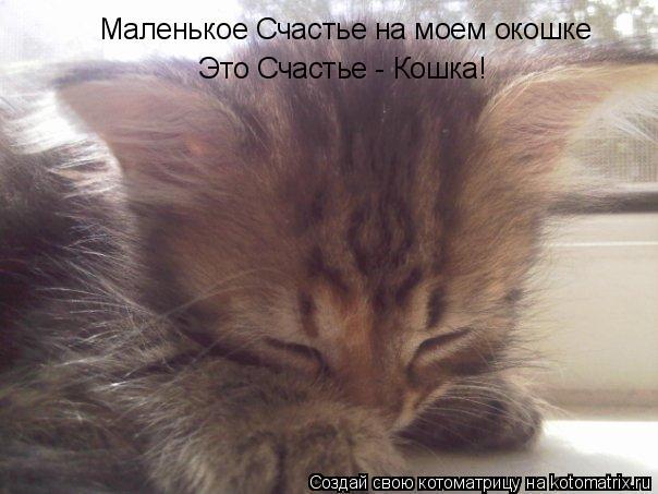 Котоматрица: Маленькое Счастье на моем окошке Это Счастье - Кошка!