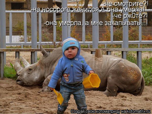 Котоматрица: -че смотрите?! -на носороге женился,А она умерла! -че рж0те?! -она умерла, а мне закапывать...!