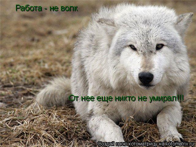 Котоматрица: Работа - не волк От нее еще никто не умирал!!!