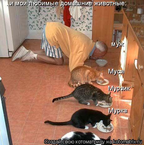 Котоматрица: ..и мои любимые домашние животные: муж Мурзик Мурка Муся