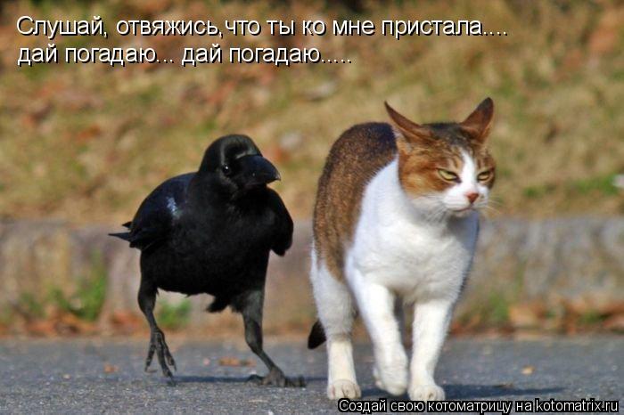 Котоматрица: Слушай, отвяжись,что ты ко мне пристала.... дай погадаю... дай погадаю.....