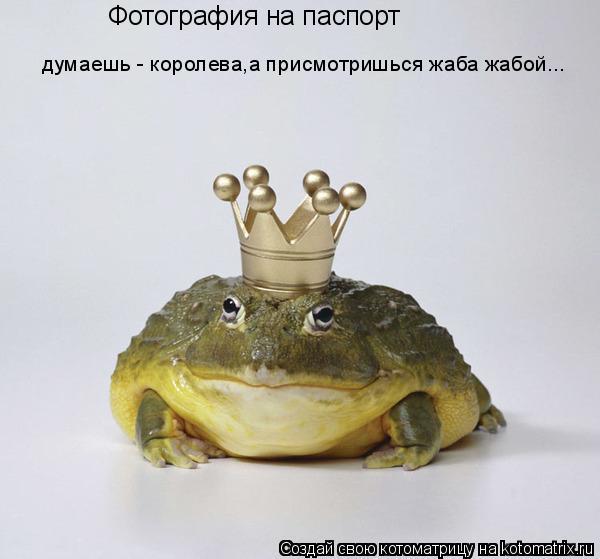 Котоматрица: Фотография на паспорт думаешь - королева,а присмотришься жаба жабой...