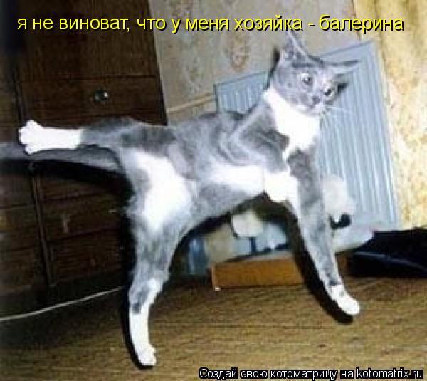Котоматрица: я не виноват, что у меня хозяйка - балерина