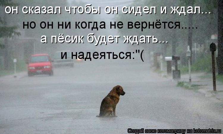 """Котоматрица: он сказал чтобы он сидел и ждал... но он ни когда не вернётся..... а пёсик будет ждать... и надеяться:""""("""