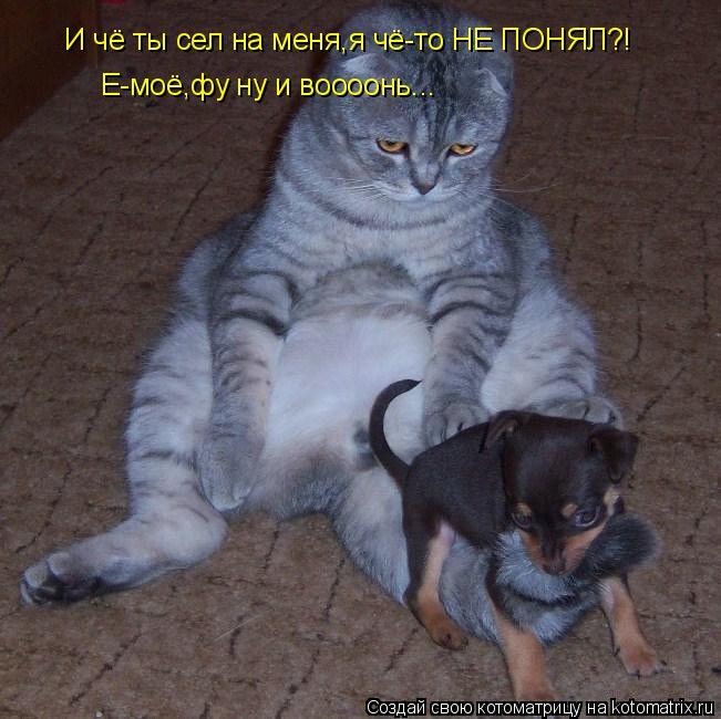 Котоматрица: И чё ты сел на меня,я чё-то НЕ ПОНЯЛ?! Е-моё,фу ну и воооонь...