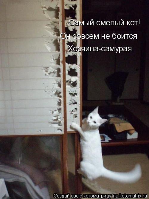 Котоматрица: Самый смелый кот! Он совсем не боится Хозяина-самурая.