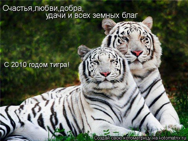 Котоматрица: Счастья,любви,добра, удачи и всех земных благ С 2010 годом тигра!