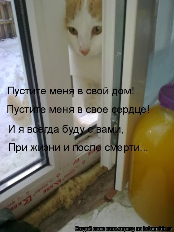 Котоматрица: Пустите меня в свой дом! Пустите меня в свое сердце! И я всегда буду с вами, При жизни и после смерти...