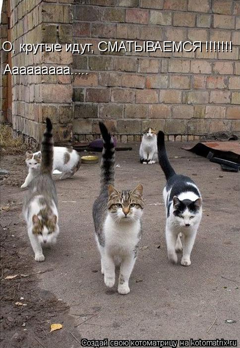 Котоматрица: О, крутые идут, СМАТЫВАЕМСЯ !!!!!!! Ааааааааа.....