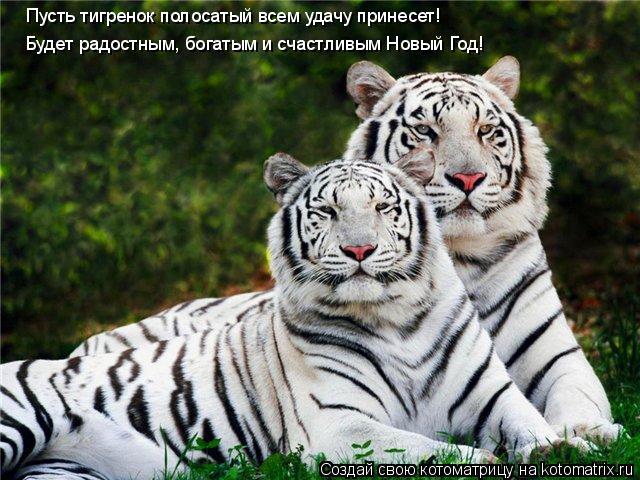 Котоматрица: Пусть тигренок полосатый всем удачу принесет! Будет радостным, богатым и счастливым Новый Год!