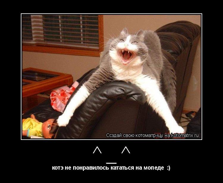 Котоматрица: ^_^ котэ не понравилось кататься на мопеде  :)