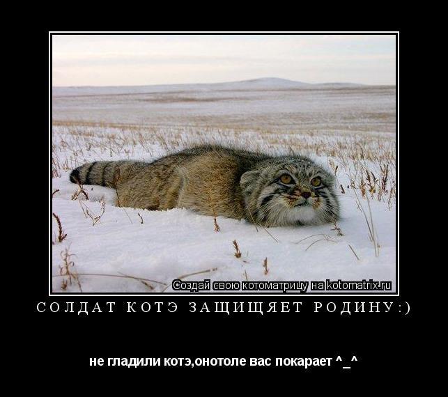 Котоматрица: солдат котэ защищяет родину:) не гладили котэ,онотоле вас покарает ^_^