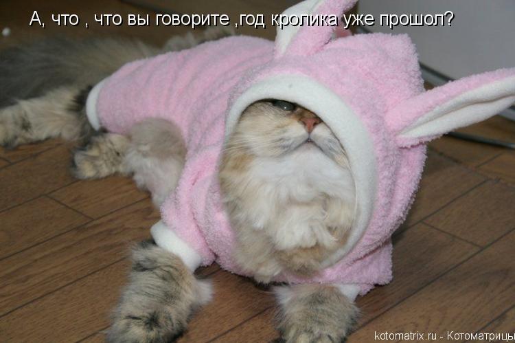Котоматрица: А, что , что вы говорите ,год кролика уже прошол?