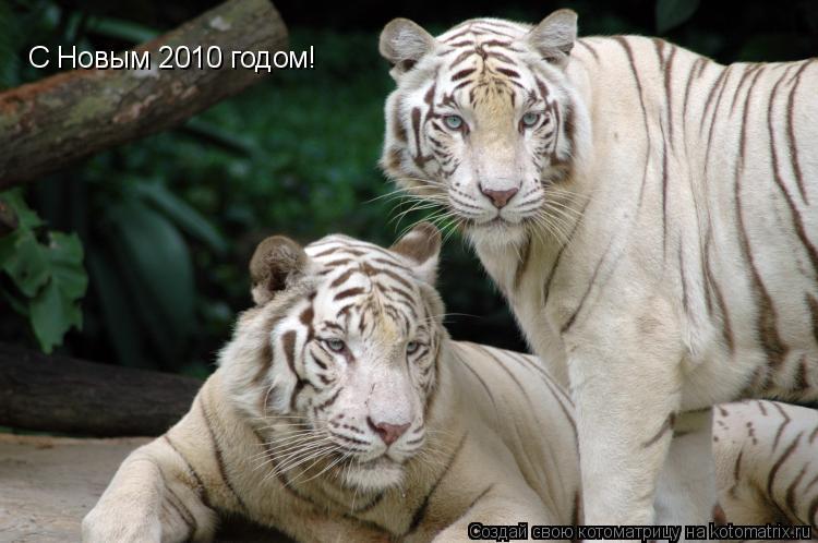 Котоматрица: С Новым 2010 годом!