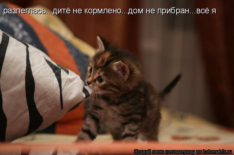 Котоматрица: разлеглась...дитё не кормлено...дом не прибран...всё я