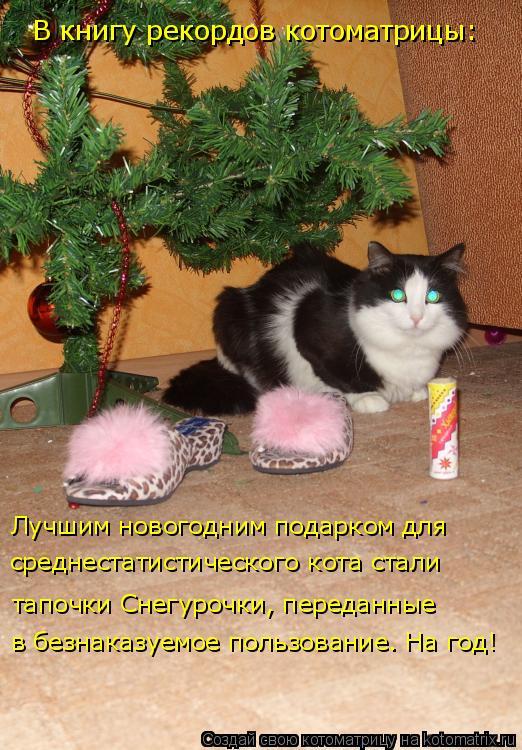 Котоматрица: в безнаказуемое пользование. На год! Лучшим новогодним подарком для тапочки Снегурочки, переданные  среднестатистического кота стали В кн
